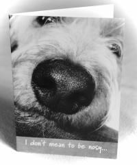 Card-Nosy